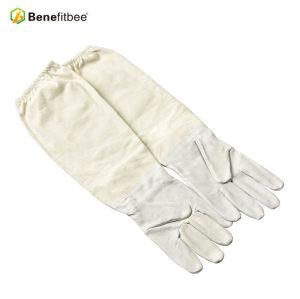 Équilibre apicole L'apiculteur des Canvas blancs utilise des gants protecteurs pour l'apiculture profesessionnelle