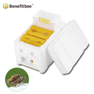 Beekeeping tool equipment mini mating box bee breeding box