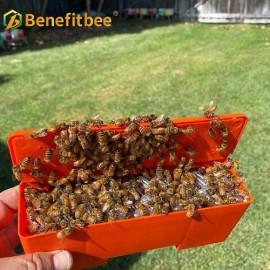 Benefitbee Plastic Queen Bee Protection Box  For Queen Rearing