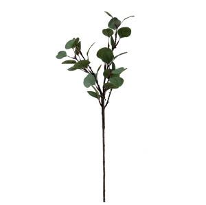 Top-grade Ficus