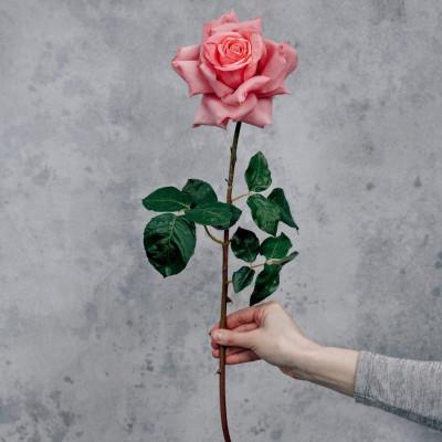 RESUP Pink Rose Open