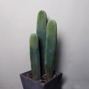 RESUP Big Artificial Cactus bonsai in Plastic Pot 0141 54'' Tall Large Artificial Cactus Wholesale China Factory