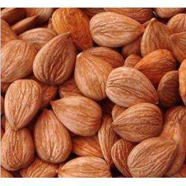 Organic Bitter Apricot Seeds