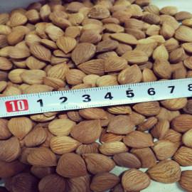Organic Raw Bitter Apricot Kernels Seeds High In B17 Amygdalin