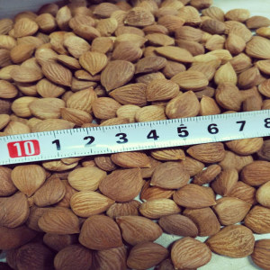 Organic Raw Bitter Apricot Kernels Seeds High In B17 Amygdalin