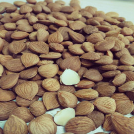 Almond China Supplier Bitter Apricot Kernels