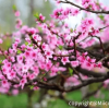Miicofun's Transparent Tent in Guangzhou Peach Blossom Town