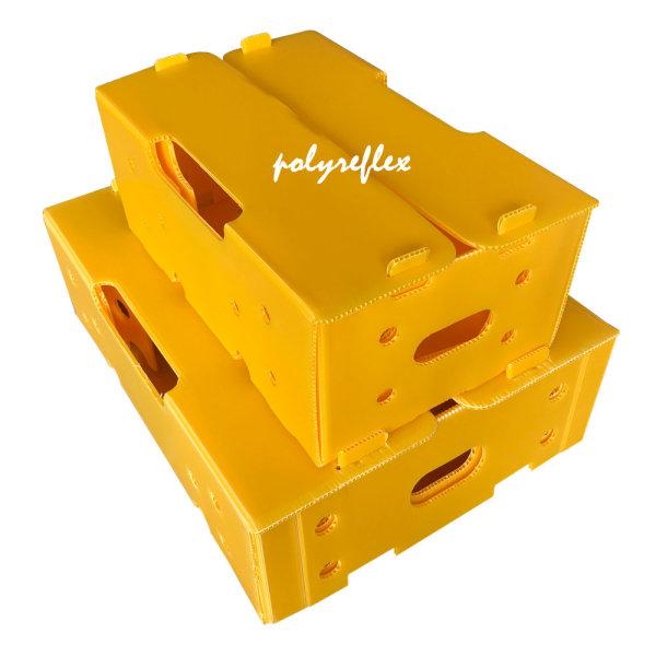 Plastic Box & Divider