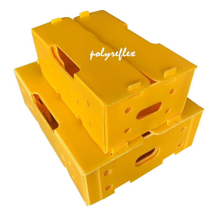 What Are The Advantages Of Plastic Boxes / Popypropylene Corrugated Boxes?