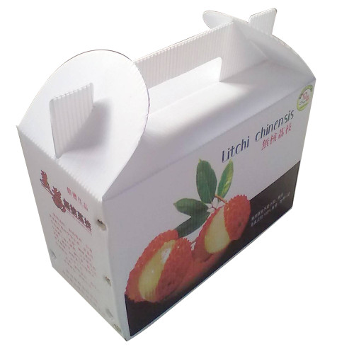 Durable Lightweight Waterproof PP Corrugated Box for Agriculture and Food