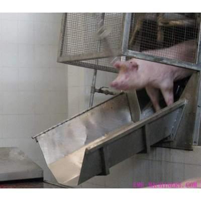 Pig Slaughter Machine Sliding Chute For Slaughtering Plant