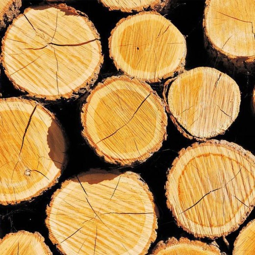 As land battles intensify, British forestry value rises 23%