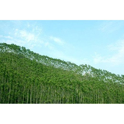 The total output value of China's forestry industry in the first three quarters is 5.13 trillion yuan
