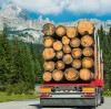 Resolute Forest acquires three US sawmills for Conifex timber