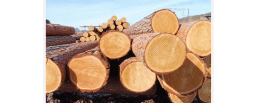 Topoceanパーティクルボードの木材需要