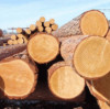 Will the demand for wood imports disappear or be delayed?