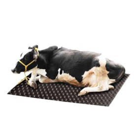 1220mm * 1830mm * 17mm facile à entretenir Nettoyer tapis anti-glisse de vache