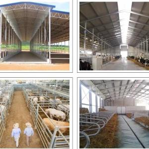 Prefabricated Steel Structure Poultry Farm For Dairy  Shed  In New Zealand