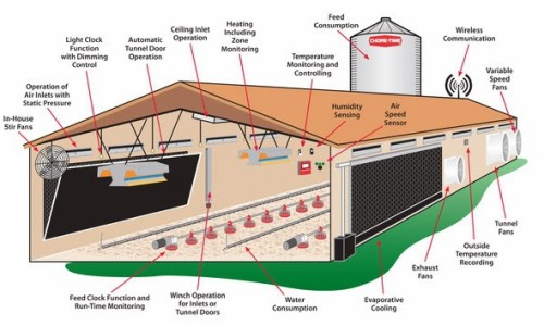 Prefabricated Poultry Farm For 1000 Broiler Poultry Chicken House China Made