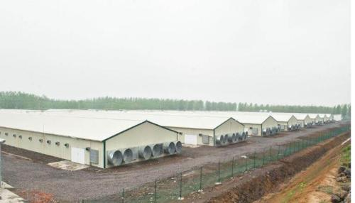 Prefab Steel Structure Poultry Houses construction equipment For sale