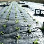 Farming Weed Control Fabric
