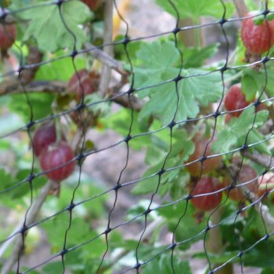 Crop Protection & Enhancement