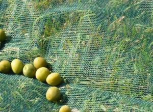 Harvest Collection Net