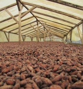 Cocoa Drying Tarp