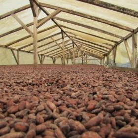 Cocoa Drying Tarp