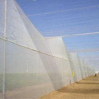 Rice Farm Anti-Insect Net