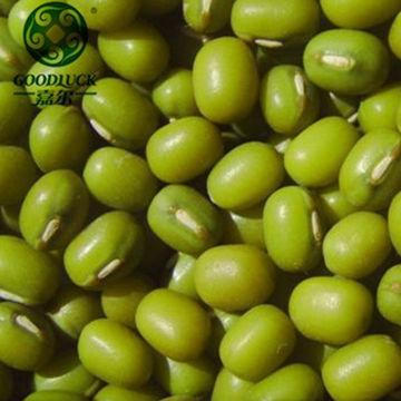Mung beans in wholesale green mung beans 2019 year dried vigna beans