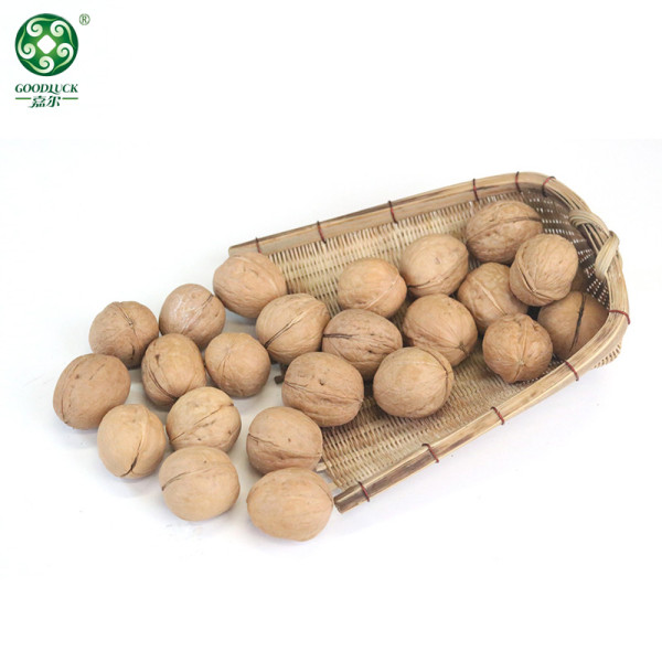 Wholesale 33 Walnuts In Thin Shell For Sale In Cheaper Price