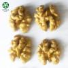 China Extra Light Halves Walnut Kernels Online At Reasonable Price
