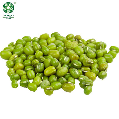 Green Mung Beans High Quality Non-Gmo Large Export Vigna Beans