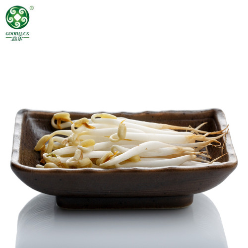 Factory Supply Protein In Wholesale Green Mung Beans For Sprouting