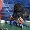 Jerryborg Marine Offers Yokohama Type Floating Pneumatic Rubber Fender for STS Operation Service Company