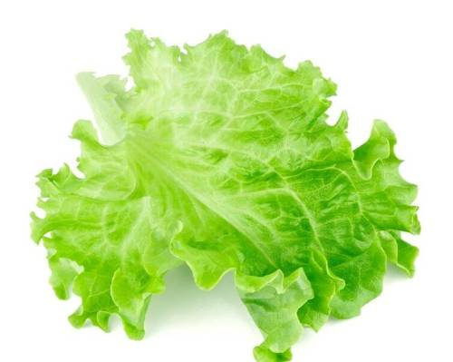 Automatic Vegetable Salad Lettuce Packing Machine Salad Packing Machine