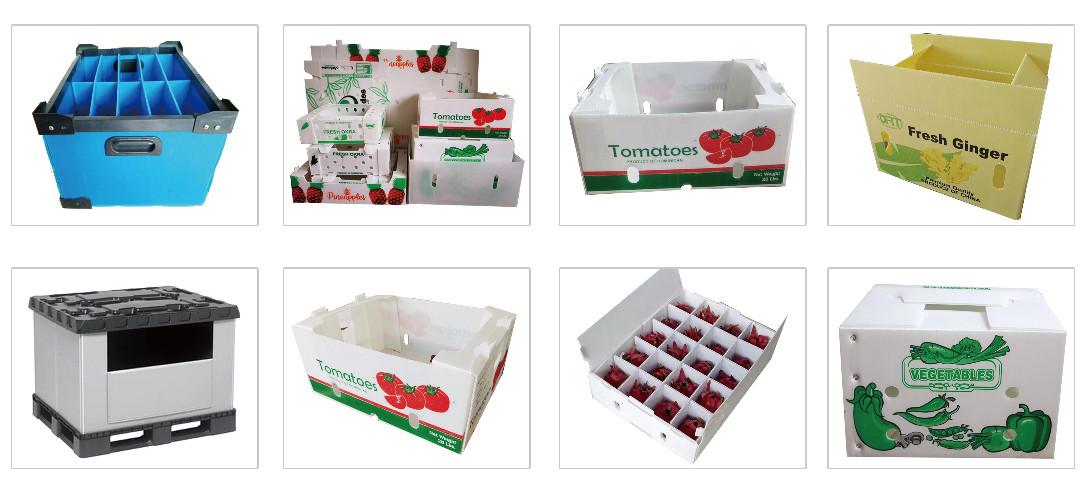 Tongsan Pp box