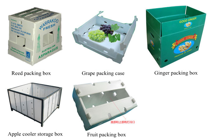 Application of PP Plastic Hollow Corrugated sheet/Plate in Fruit,Vegetable and Food Packaging