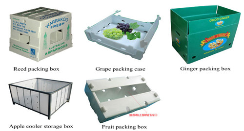 PP hollow sheet using for fruit/vegetable/food packing box