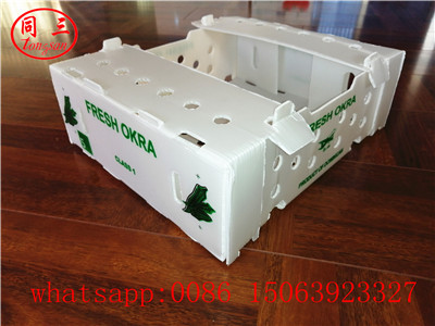 pp hollow sheet vegetables  packing box