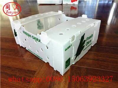 Plastic hollow corrugated box