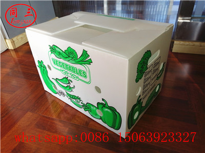 Vegetables packing box