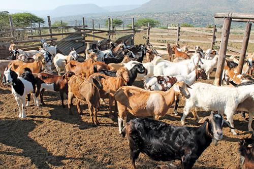 Отверждение отходов животноводства