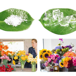 Super Absorbent Polymer For Transporting Cut Flowers
