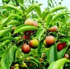 Application of soil water-retaining agent in growing seedlings of fruit forest