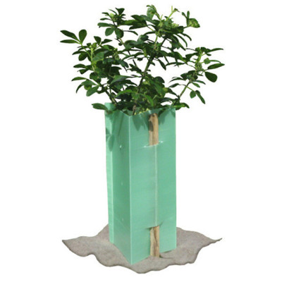 Customized plant protector  PP plastic triangle welding corflute tree guards