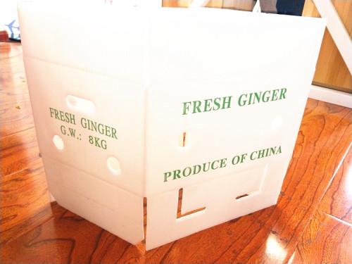 PP Corrugated corflute foldable okra packing box