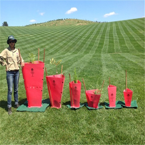 PP corflute tree guards for vine protection