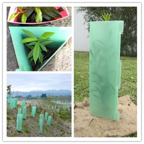 Translucent Green Tri-angle Plants Protection PP Corrugated Corflute Tree Guard Protector